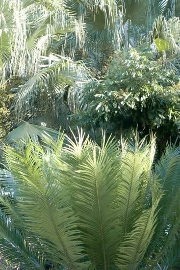 ferns in gardens by the bay